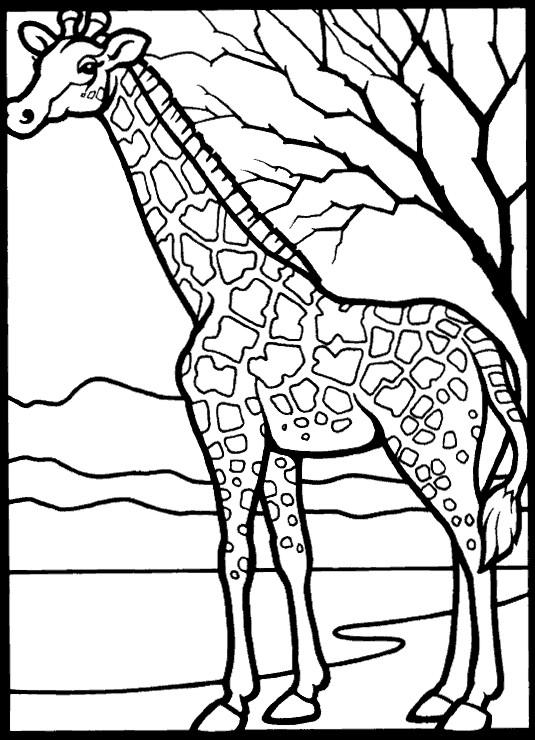 Índice de dibujos: jirafas