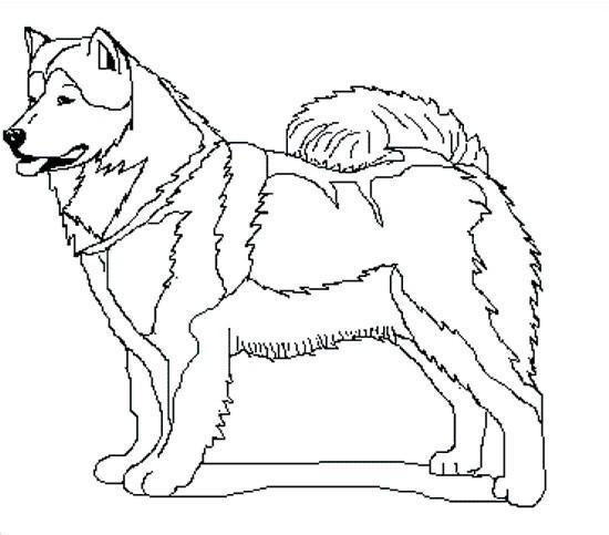 Perros para colorear alaska - Imagui