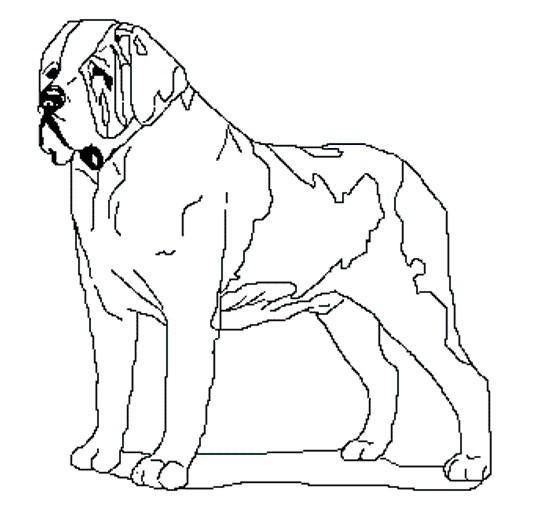 Imagenes de un perro san bernardo para colorear - Imagui