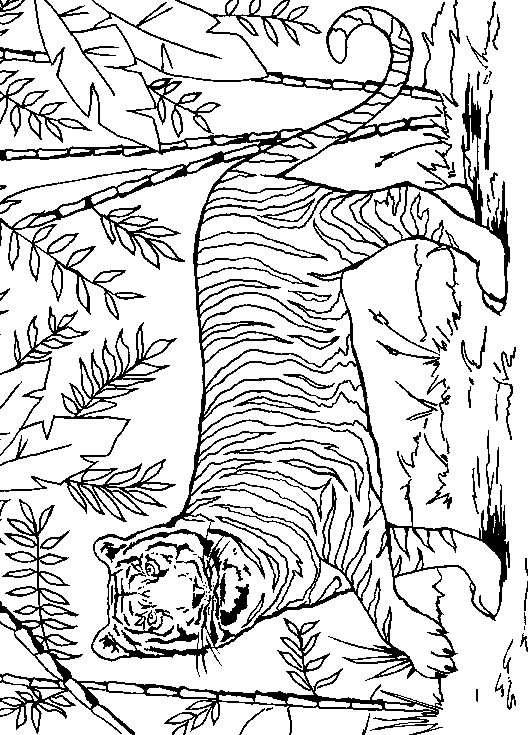 ndice de dibujos tigres